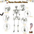 5.4ft Halloween Skeleton Life Size Realistic Full Body Hanging